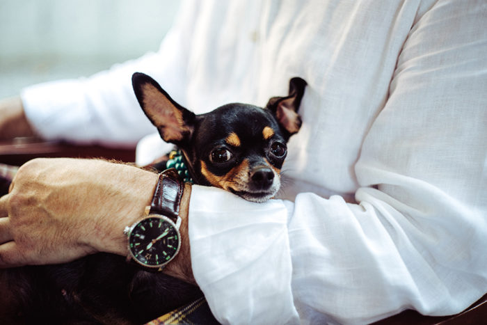 Check for pet-friendly amenities in your next apartment.