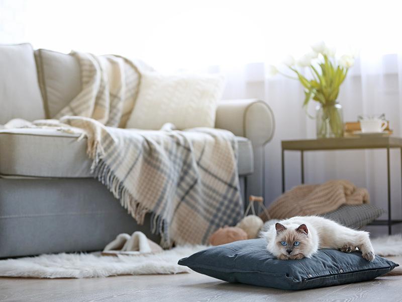 Pet Friendly Community | Silverwood Apartments in Gresham, OR
